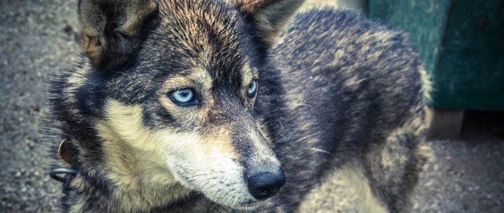 Hunde aus dem Trierer Tierheim sollen künftig für zwei Jahre von der Hundesteuer befreit werden