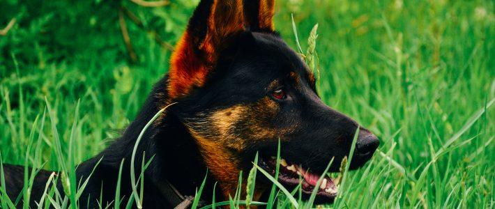 Wandern mit Hund im Saarland