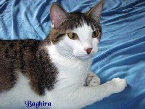 """Katze """"Baghira"""""""
