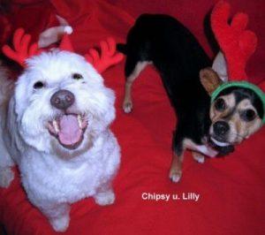 """""""Chipsy"""" u. """"Lilly"""""""