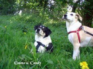 """Cosmo"" u. ""Candy"""