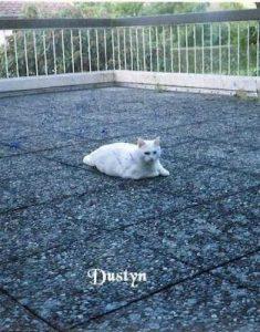 """Kater """"Dustyn"""""""