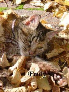 "Katze ""Emily"""