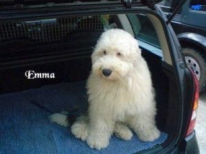 "Bobtail ""Emma"""
