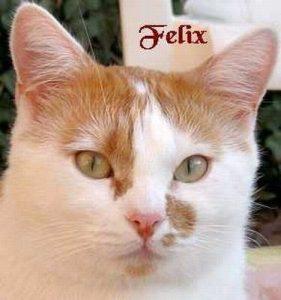 """Kater """"Felix"""""""