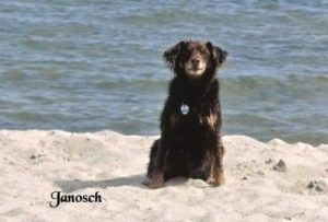 """Mischling """"Janosch"""""""