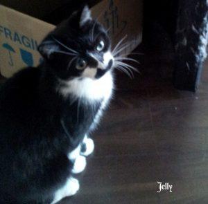 "Katze ""Jelly"""