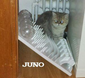 """Perserkatze """"Juno"""""""