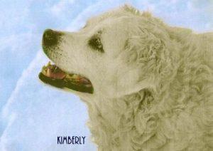 "Mischling ""Kimberly"""