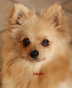 """Spitz """"Lilou"""""""