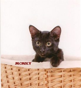 "Kater ""Monky"""