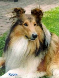 "Collie ""Robin"""