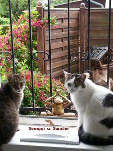 """Semgyi"" u. ""Sancho"""