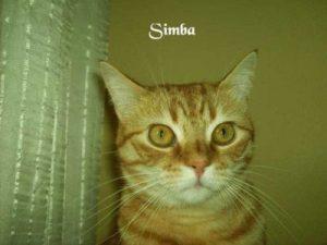 """Kater """"Simba"""""""