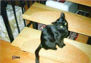 """Katze """"Sina"""""""
