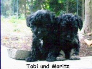 "Pudel ""Tobi"" u. ""Moritz"""