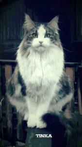 "Katze ""Tinka"""