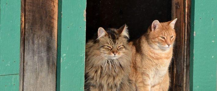 Die meisten Katzen mögen keine Hausbesuche