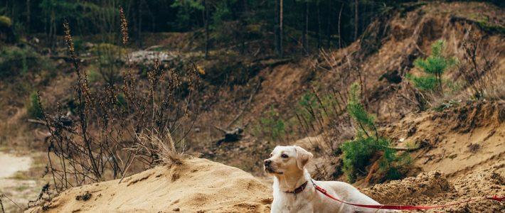 Leinenpflicht für Hunde im Wald ist in den Bundesländern unterschiedlich geregelt.