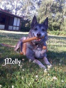 "Malinois-Mischling ""Molly"""