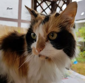 "Katze ""Mausi"""