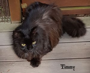"Kater ""Timmy"""