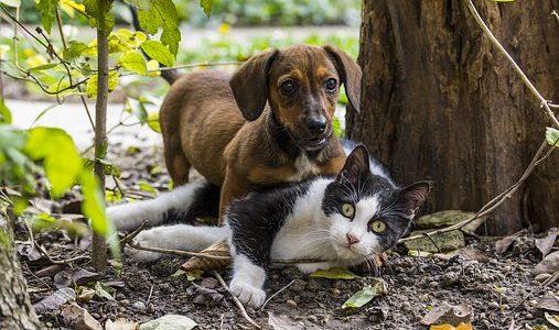 Hunde bekommen Borreliose - Katzen nicht