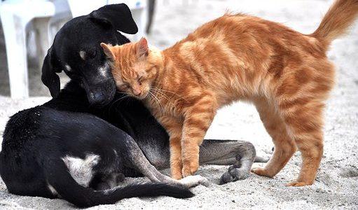 Hunde u. Katzen gesund durch den Winter bringen