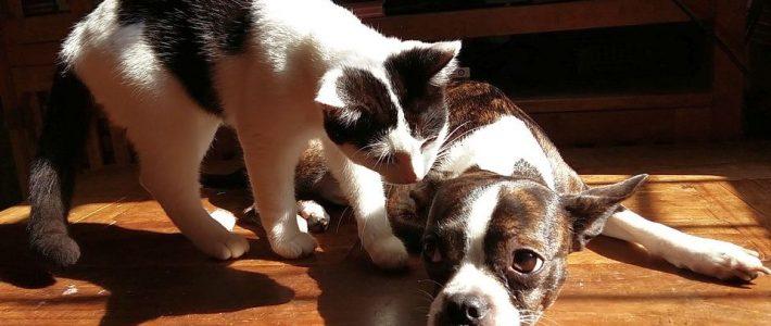 Hund u. Katze als Wohngemeinschaft