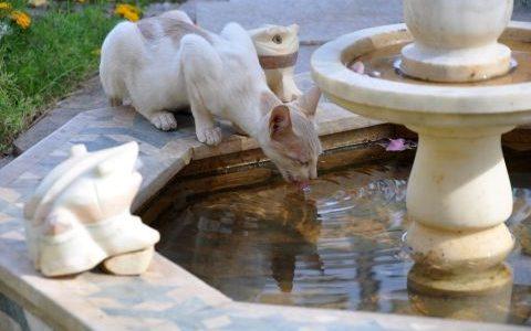 Katzen und Sommerhitze