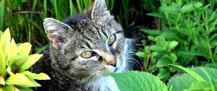 Eosinophiles Granulom bei Katzen