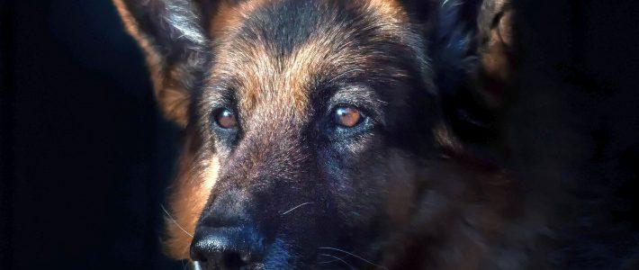 Befristete Hundesteuerbefreiung