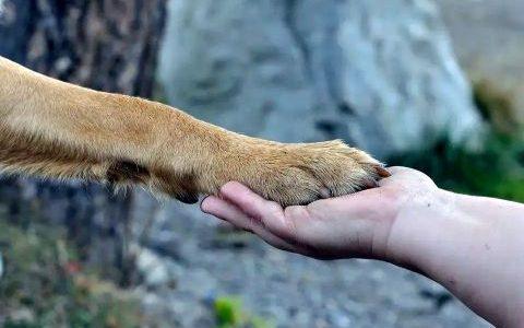 Zoonosen und ihre Gefahren für Menschen
